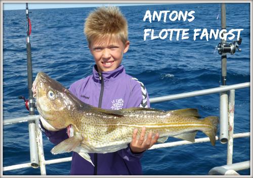 Antons-torsk